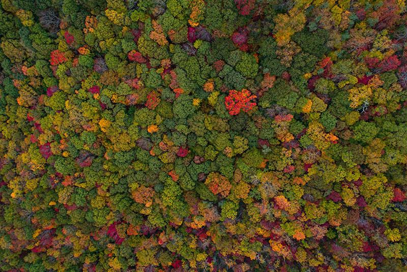 groupements-fonciers-forestiers